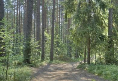 Par meža ugunsnedrošo laikaposmu